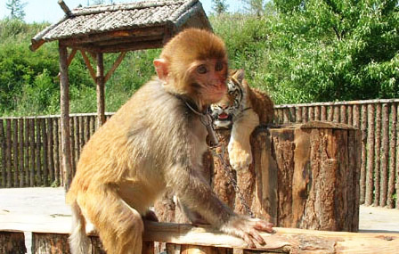 浙江省重点旅游项目,华东地区规模最大的野生动物园--杭州野生动物世界, 园区山峦起伏、流水潺潺、植被茂盛,依托原有的山形地貌设有步行区和车行区两大游览区。青山绿水间徜徉着来自世界各地的几百种珍禽异兽和我国一、二级保护动物近万只。如:白狮、白虎、白犀牛、大熊猫、金丝猴等。建有同时容纳8000名游客的大型综合表演场。 杭州野生动物世界占地3500亩,总投资2.